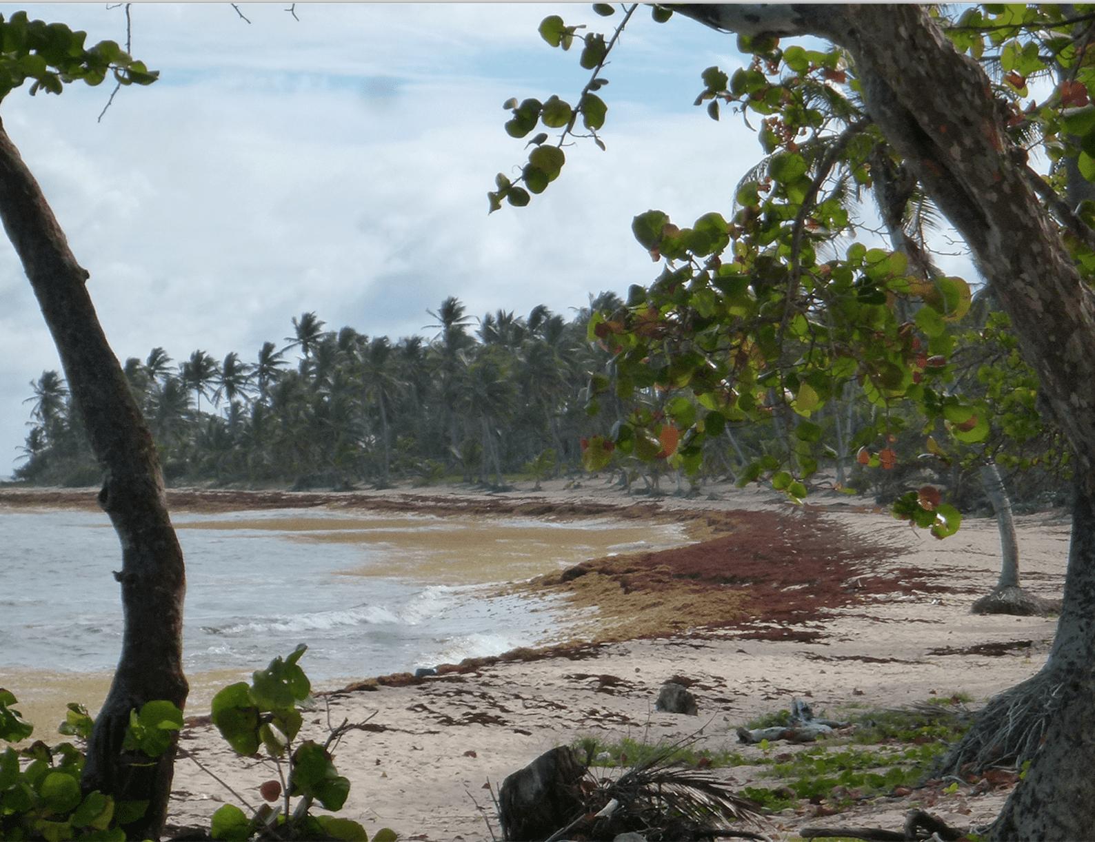 Stéphane Le Diraison s'engage avec Time For Oceans dans la lutte contre la prolifération des algues Sargasses.